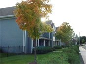 Hamline Townhomes Property View